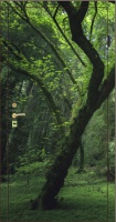 Фотопанель природа №5